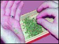 instructions on how to de-seeding your weed.